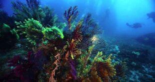 La vita nello Stretto di Messina: un progetto di monitoraggio delle acque e della biodiversità