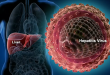 Giornata mondiale dell'epatite. Cosa c'è da sapere sui virus?